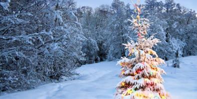 Weihnachten-Schnee-Winter-Wald-bunt-Licht.jpg